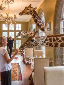 nairobi giraffe manor